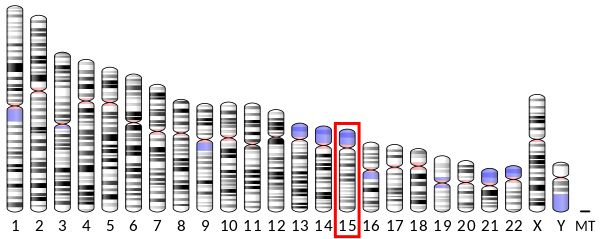 Chromosome 15 (human) Mutations in the OCA2 gene cause a disruption in the normal production of melanin; therefore, causing vision problems and reductions in hair, skin, and eye color. Oculocutaneous albinism caused by mutations in the OCA2 gene is called oculocutaneous albinism type 2. The prevalence of OCA type 2 is estimated at 1/38,000-1/40,000 in most populations throughout the world, with a higher prevalence in the African population of 1/3,900-1/1,500.