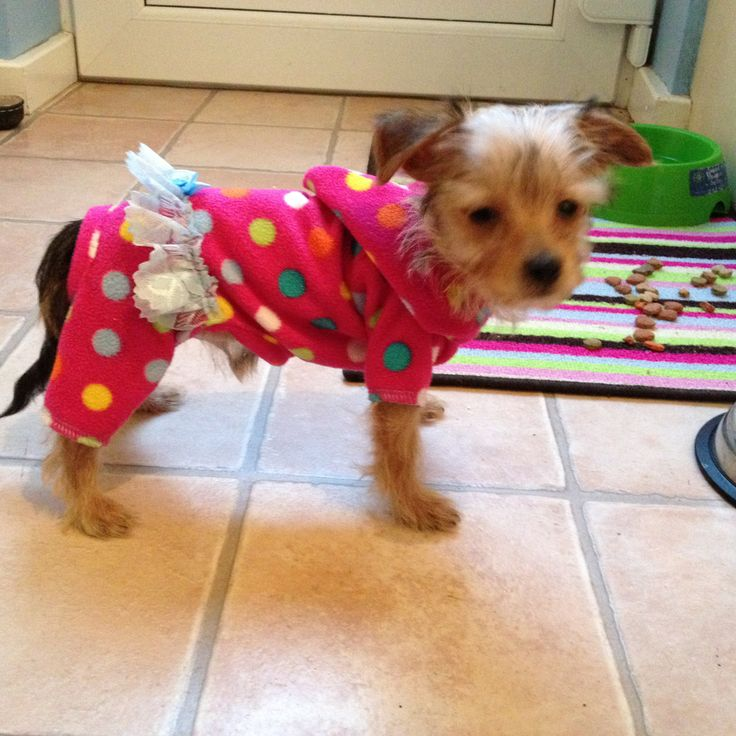 52 Best Doggy Style Designer Clothing For Your Pooch