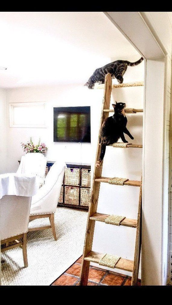 Cadder, Cat Ladder (Cadder), Cat Furniture