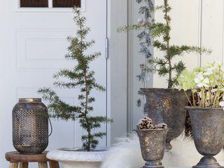 Sedertre – en vintergrønn skjønnhet