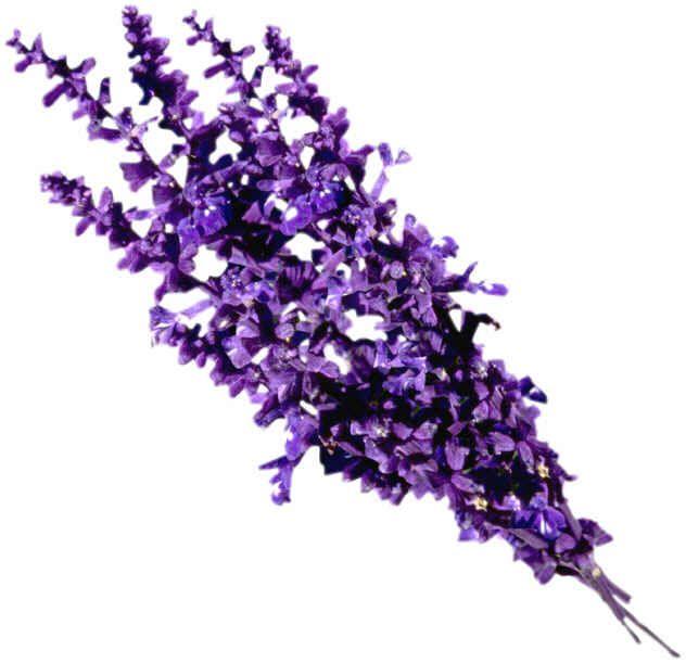 13 stalks one flower