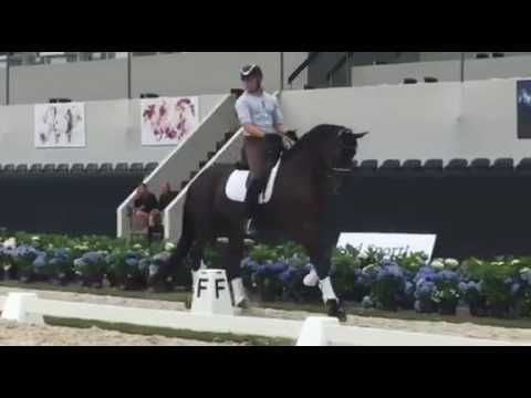 Only one day left and Endel Ots will present his hanoverian Lucky Strike at the world breeding championships for young dressage horses in Ermelo.
