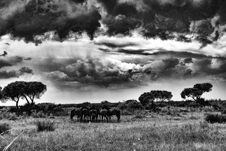 horses under a leaden sky by marco branchi on 500px