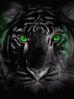 Green tiger eyes - photo#5