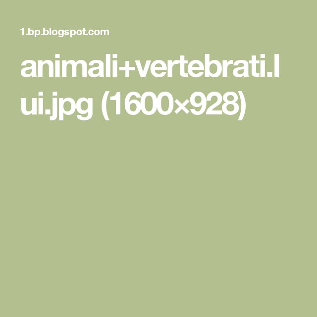 animali+vertebrati.lui.jpg (1600×928)