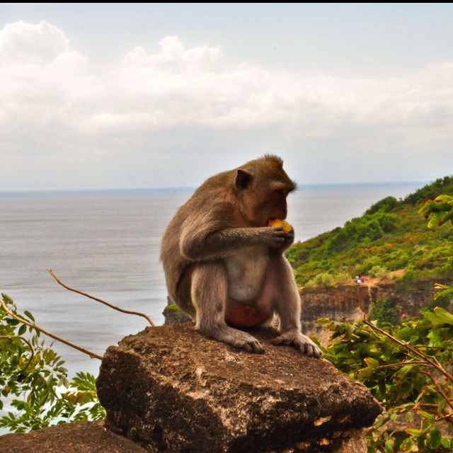 Monkey guarding a temple in Bali. Legend has it they guard the temple from evil spirits but when I was there all they did was strong arm tourists for bananas..