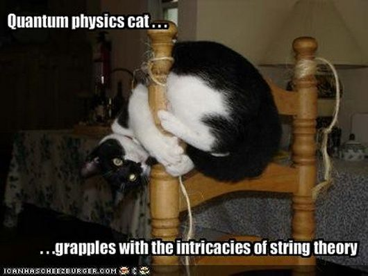 Cat String Theory Explained: Make Women Chase You!