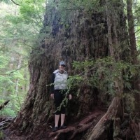 Red Creek Fir Tree is the largest Douglas Fir Tree in western Canada near Port Renfrew BC.   Beaches, Lakes and Big Trees | Trailhead Resort