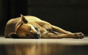 Dog heat stroke survival guide from Dogs Naturally.