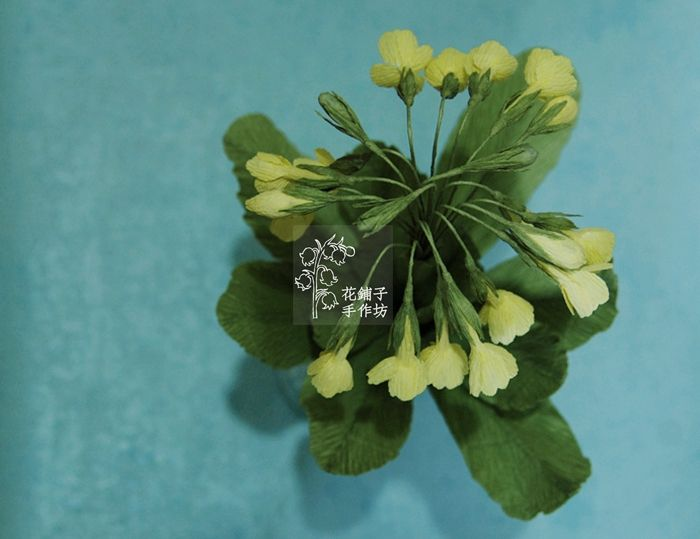 paper flower Primula sikkimensis Hook. f.