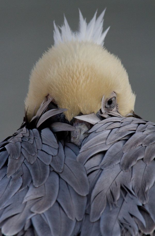 """shy bird ♥ JRB: """"We can still see you ya know."""" BIRD: """"No you can't!"""" JRB: """"I'm pretty sure we can!"""""""