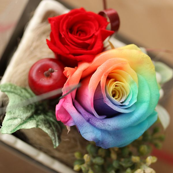 48 best rainbow rose images on pinterest rainbow roses for How much are rainbow roses