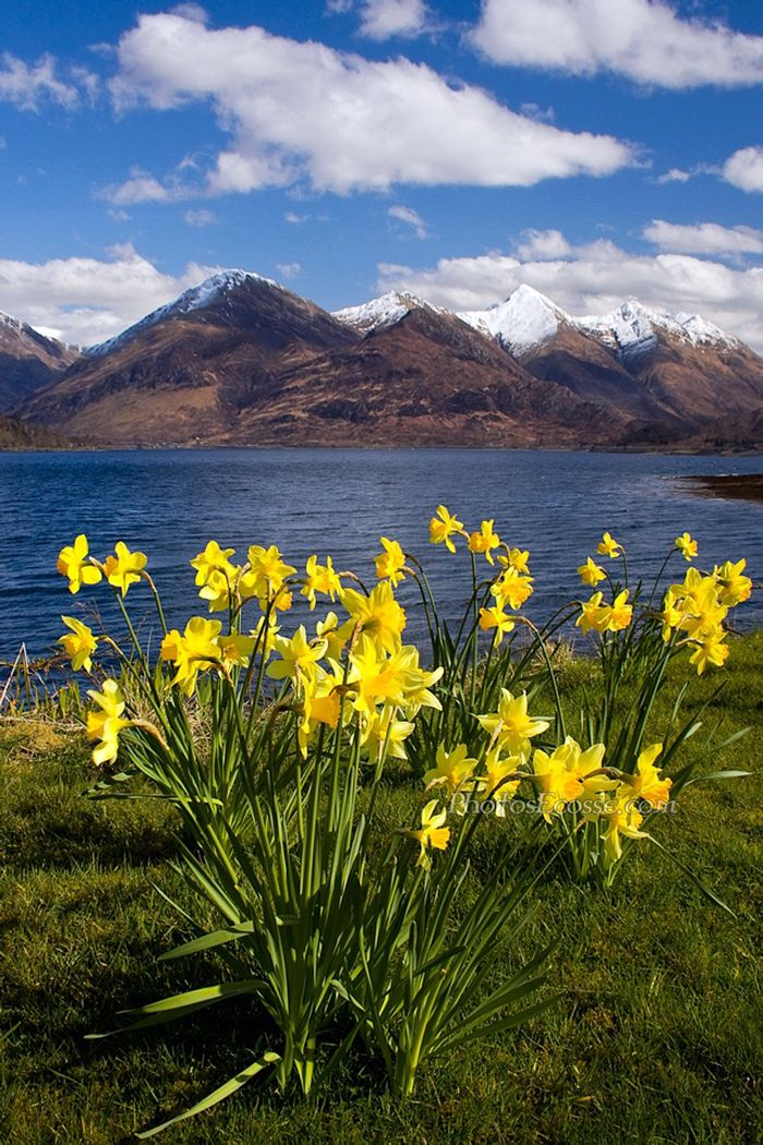 The Five Sisters of Kintail from Ratagan in Spring . Loch ...