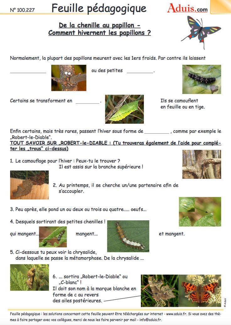Des dizaines de fiches p dagogiques les insectes - Reglementation sur les feux de jardin ...