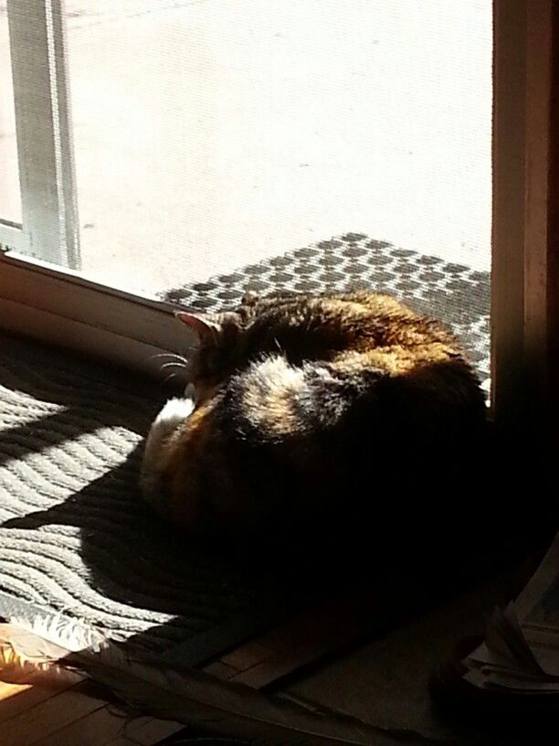 Afternoon sun nap.... right in the doorway of course.