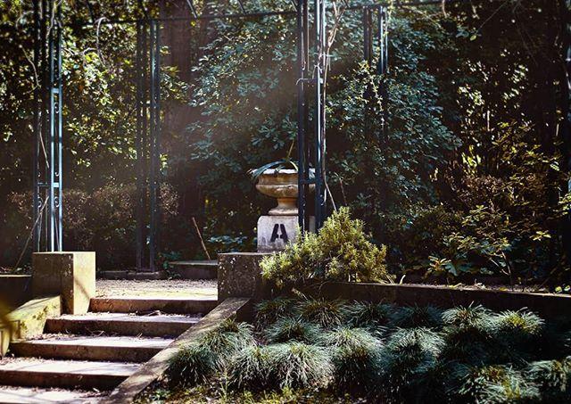 Ουέλκαμ του δε τσάνκολ  #feelingliketombraider #garden #nature #athens #nationalgarden #nationalgardenofathens #stairs #trees #sunlight #athensgreece #athensvoice #athensvibe #eyeofathens #loves_athens #great_athens #we_capture_athens