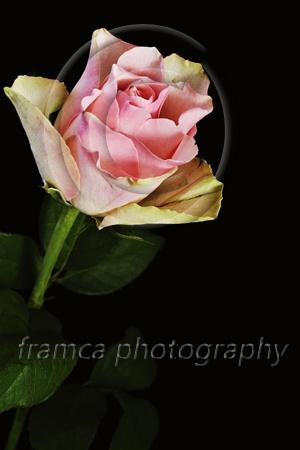Beauty  framcaphotography.com