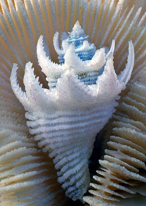 Shells are wave wells: beautiful examples of mussel photography – #Beispie …