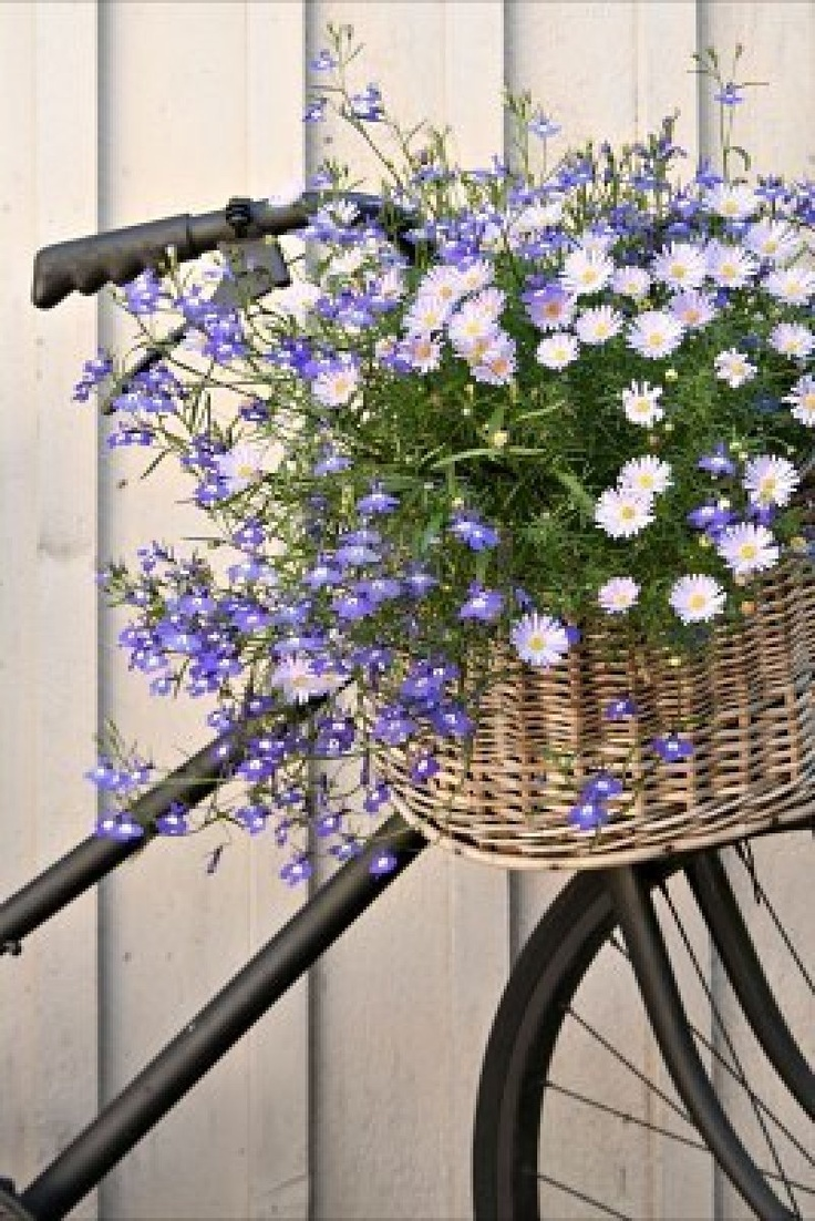 Old Bike with Basket of Flowers....like this!: Bicycles Baskets, Gardens Ideas, Spring Flowers, Shades Of Purple, Blue Flowers, Purple Flowers, Old Bike, Bike Baskets, Flowers Baskets