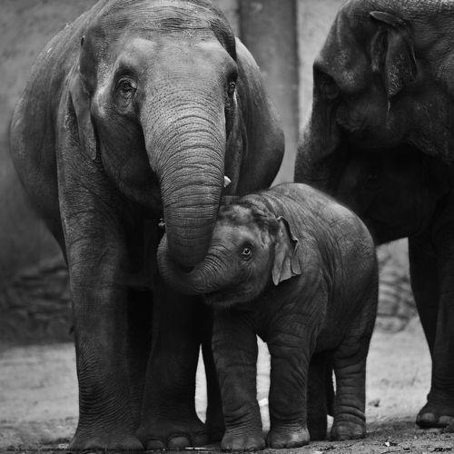 sweet elephant love! holding hands by kujaja jaja ...