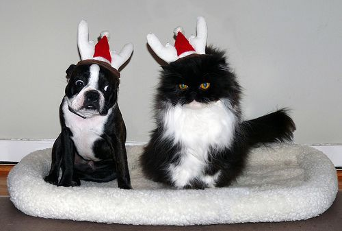 Freebies! 5 Holiday Recipes   Dr. Ihor Basko - Worldwide Holistic Veterinary Care, Acupuncture, Diet Therapy