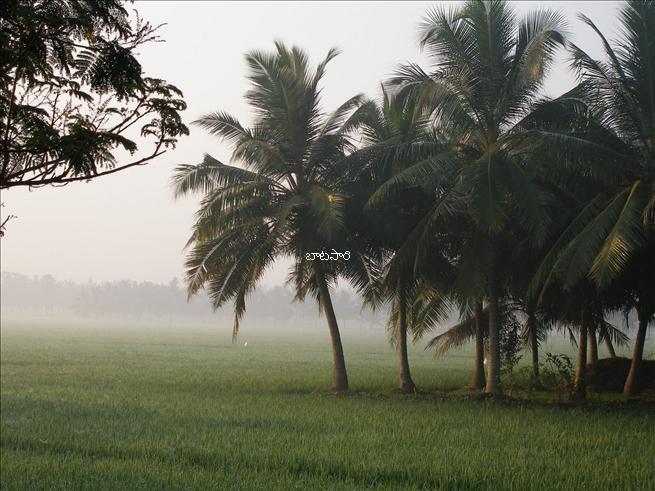 Reminds me of my dad's ancestral village! East Godavari, Andhra, India
