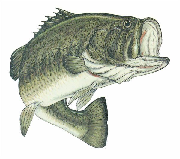 216 best images about clip art etc fish sea on for Big mouth fish