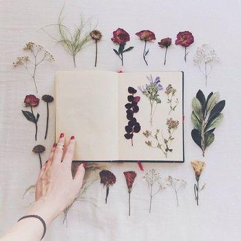[Material] desee, presiona flor flores y hojas, libros y revistas gruesas, tales como la guía telefónica