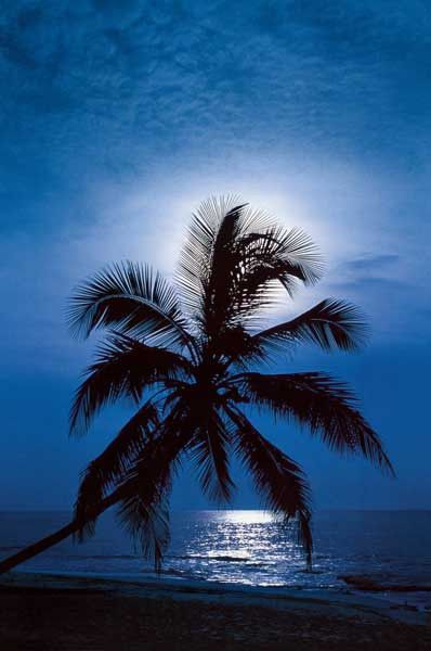 An enchanting scene of a palm tree and beach backlit by the full moon - A bit of tropical paradise for your empty walls! Ships fast. 24x36 inches. Need Poster M