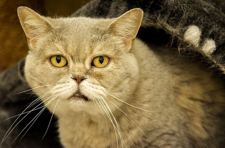 Comment soulager l'arthrose du chat ou du chien ? #chien #chat #douleur #arthrose