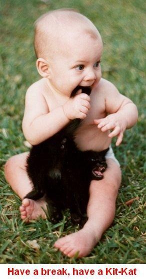 .: Funny Cat Photo, Funny Animal Pics, Kids Pics, Pet, Crazy Cat Lady, Funny Baby, Cat Faces, Funny Kids, Baby Cat