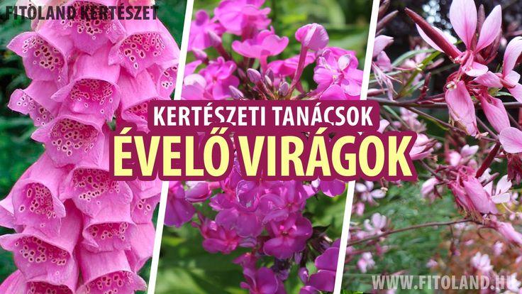 Virágzó évelő növények a kertben - kertészeti tanácsok