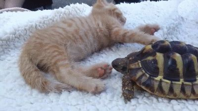 Wake Up Kitty. Turtle is Eating Your Toe