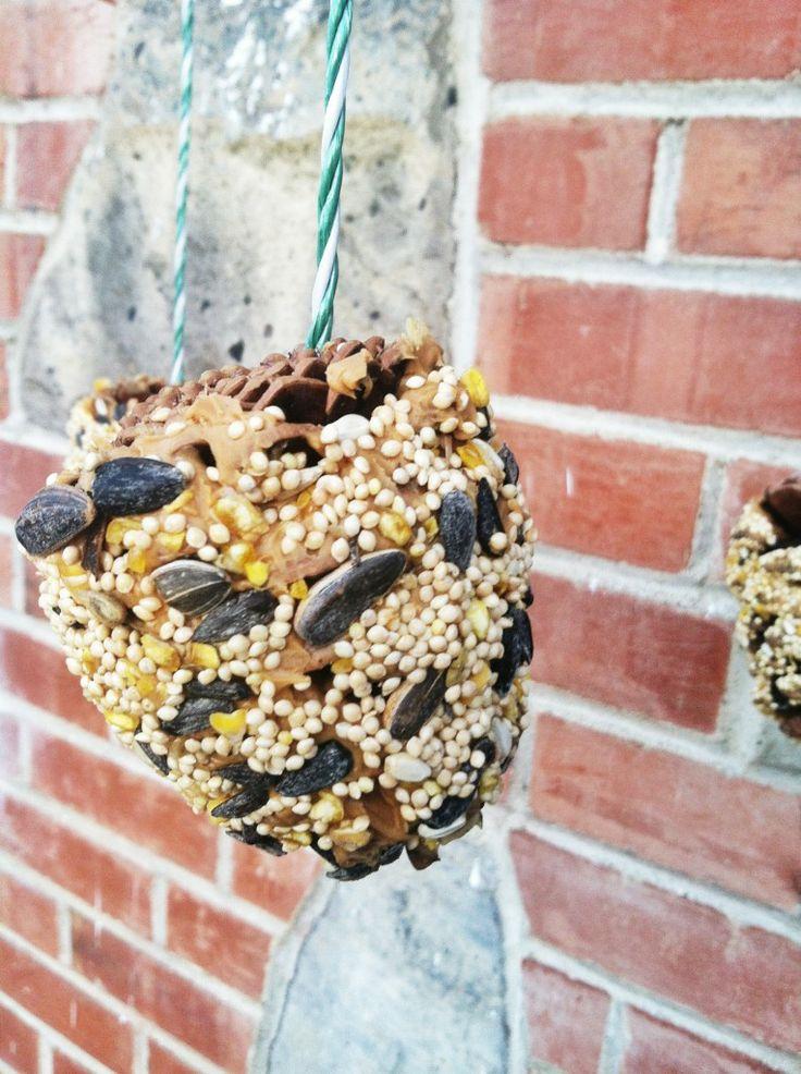 An Easy Kiddie Craft: Pinecone Bird Feeders