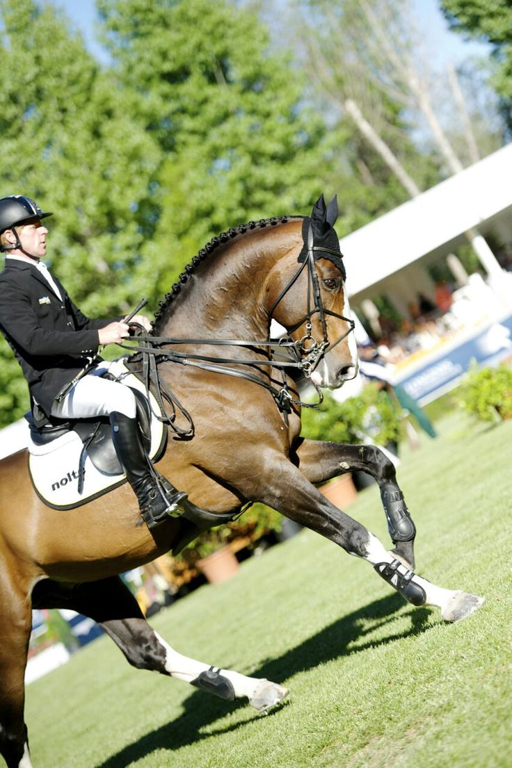 There is just as much dressage in showjumping as there is in straight dressage