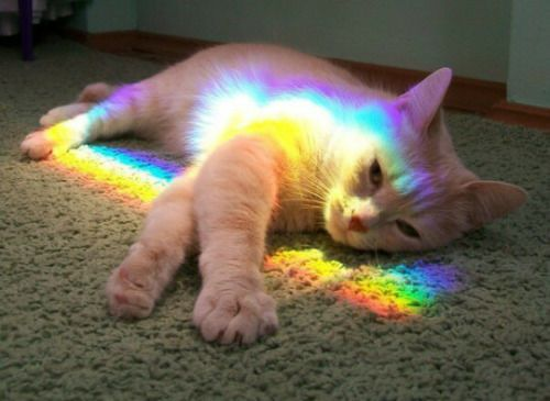 Is dis da rainbow bridge?! I hope not cuz I feels fine!