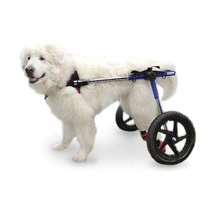 Dog Wheelchair Xl Foam Tire Dogs 70lbs Walkin Wheels Enables