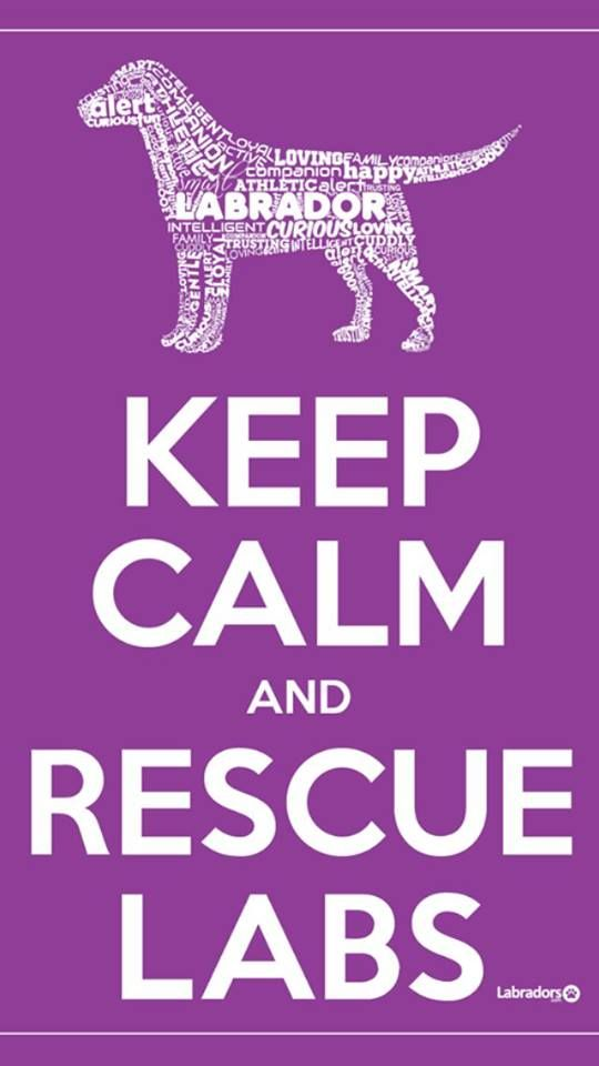 Yes. Not that one would think they need rescuing cause they're so cute!