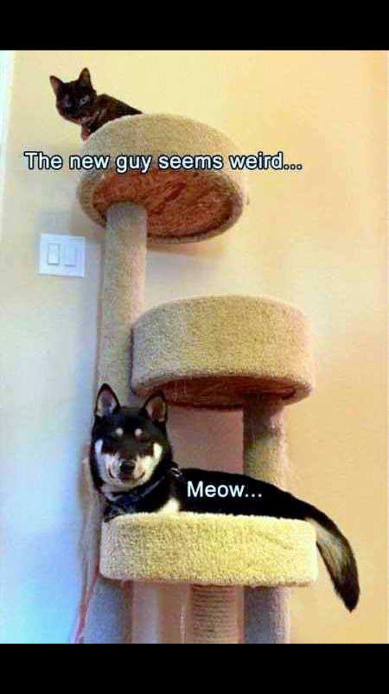 best funny stuff images on pinterest