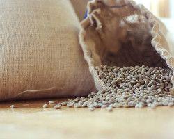 зеленый кофе в зернах для похудения