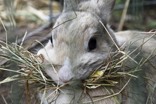 Diferencia Entre Organismos Autótrofos Y Heterótrofos Con Ejemplos Rabbit Treats Pet Rabbit Care Pet Bunny Rabbits
