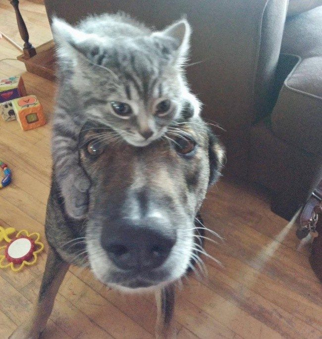 Открытки, картинки собак с кошками приколы