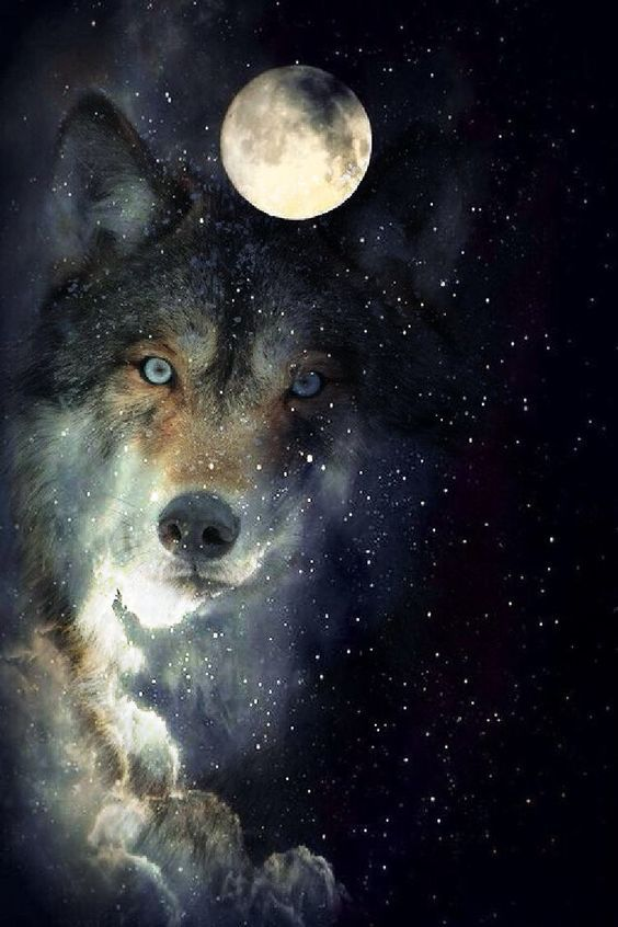Moon To Moon Moroccan Home: Wolf, Wolf Moon, Wolf