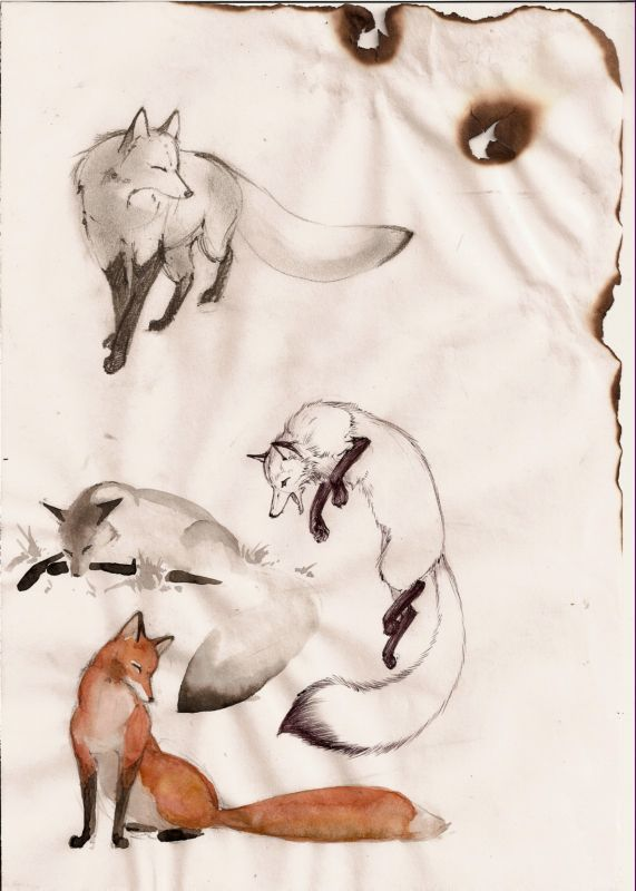 Beautifully painted foxes, I love how foxes look when painted in water colors