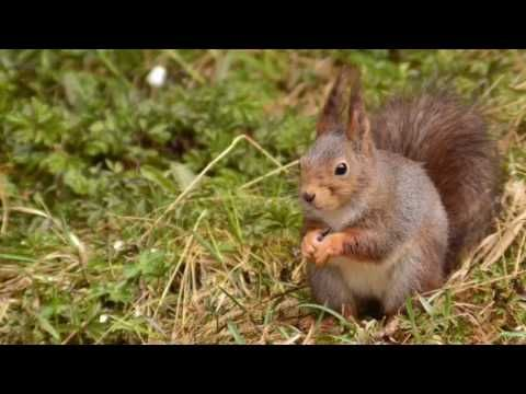 Tre ekorn i farta - three squirrels - YouTube