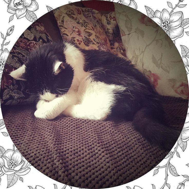 Welterusten!  | #goodnight #cat #cats #dutch #cutecat #sweet #lovely #love