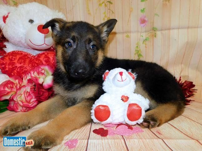 Discover Even More Info On German Shepherd Pups Visit Our Web