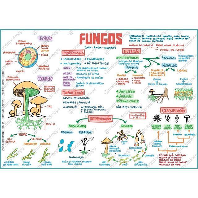Mapa Mental - Fungos Download do arquivo em alta resolução aqui…