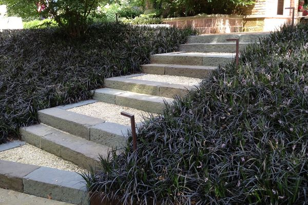 32 Best Images About Backyard Plantings On Pinterest Perennial Ground Cover Black Dragon And