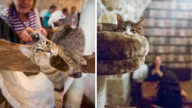 Un bar à chats ouvrira ses portes à Montréal cet été! | NIGHTLIFE.CA